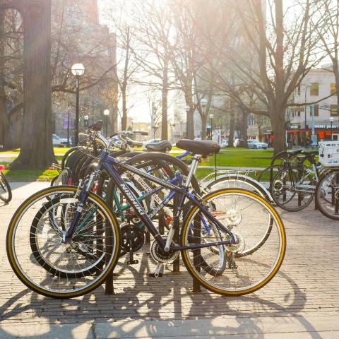 Many bikes locked up on campus