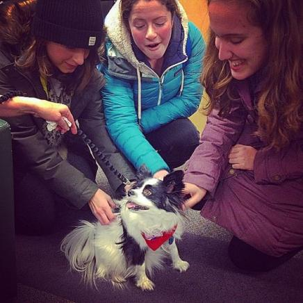 Students at UM petting a therapy dog.