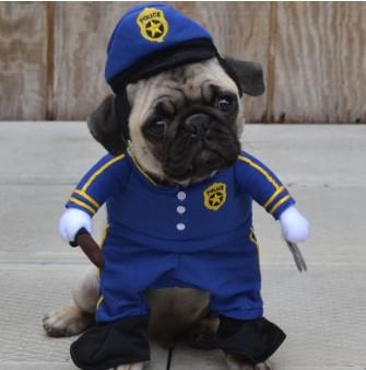 picture of pug dressed as a police man